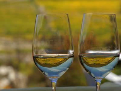 Wachauer Weißwein in Gläser