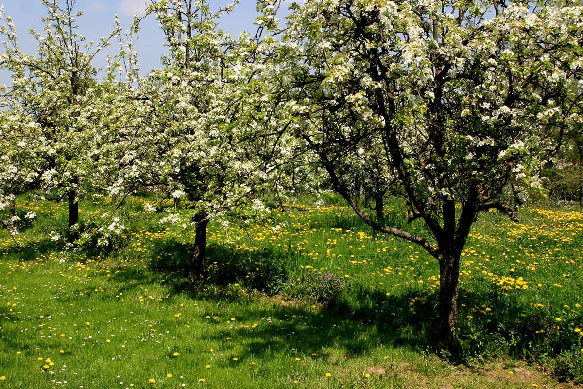 Frühling am Wagram