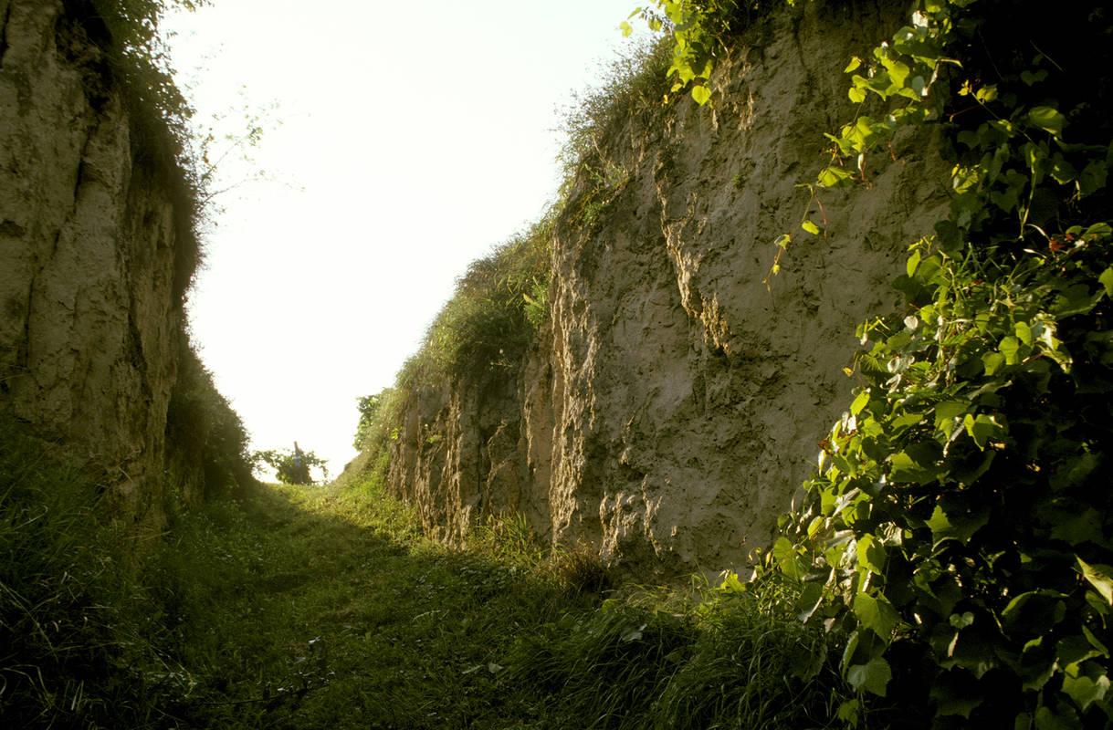 Wein- und Naturlehrpfad Hammergraben