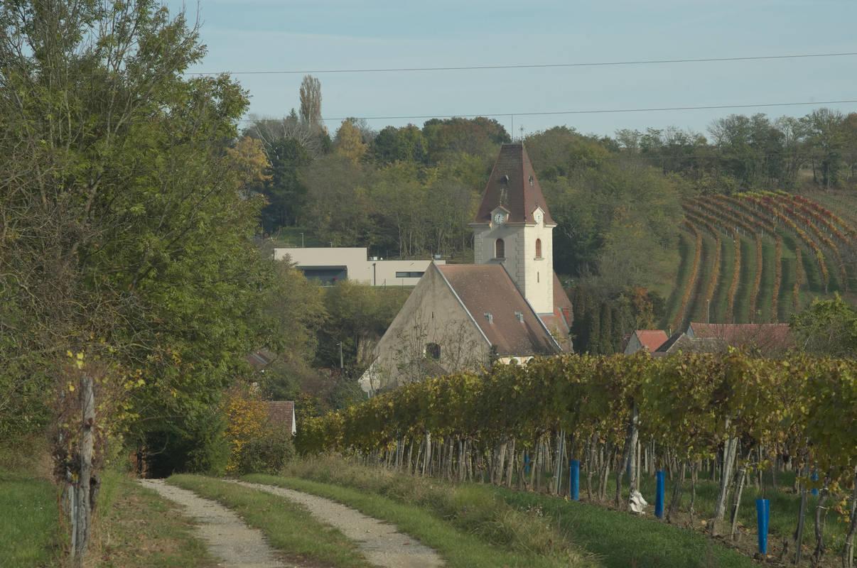 Weingärten um Ruppersthal