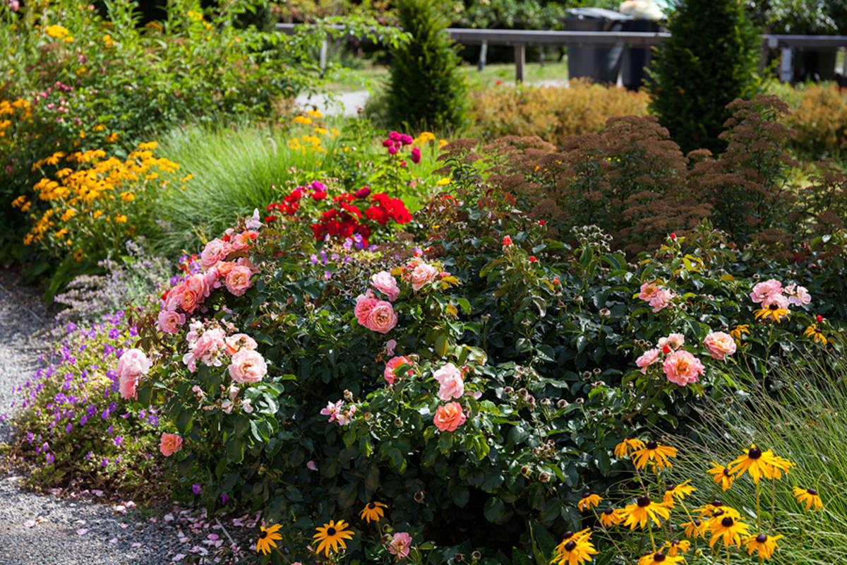 Blumen im Schlosspark Eckartsau