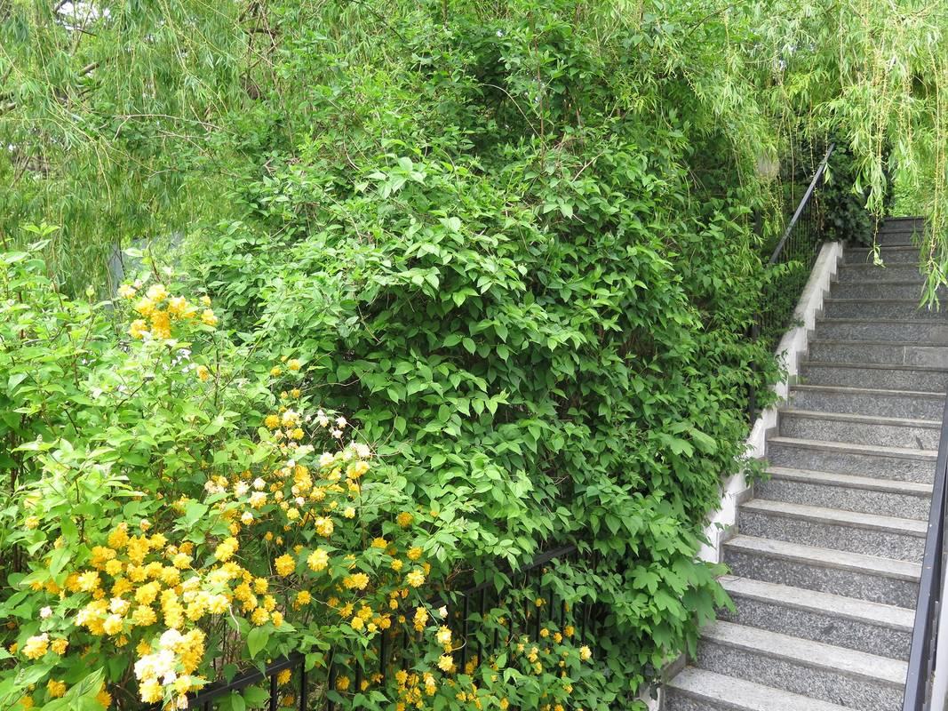 Goldenberg Treppen