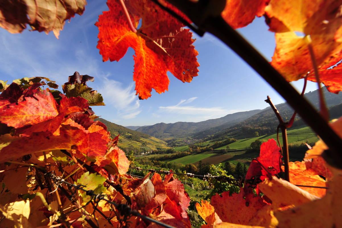 Herbst in Spitz