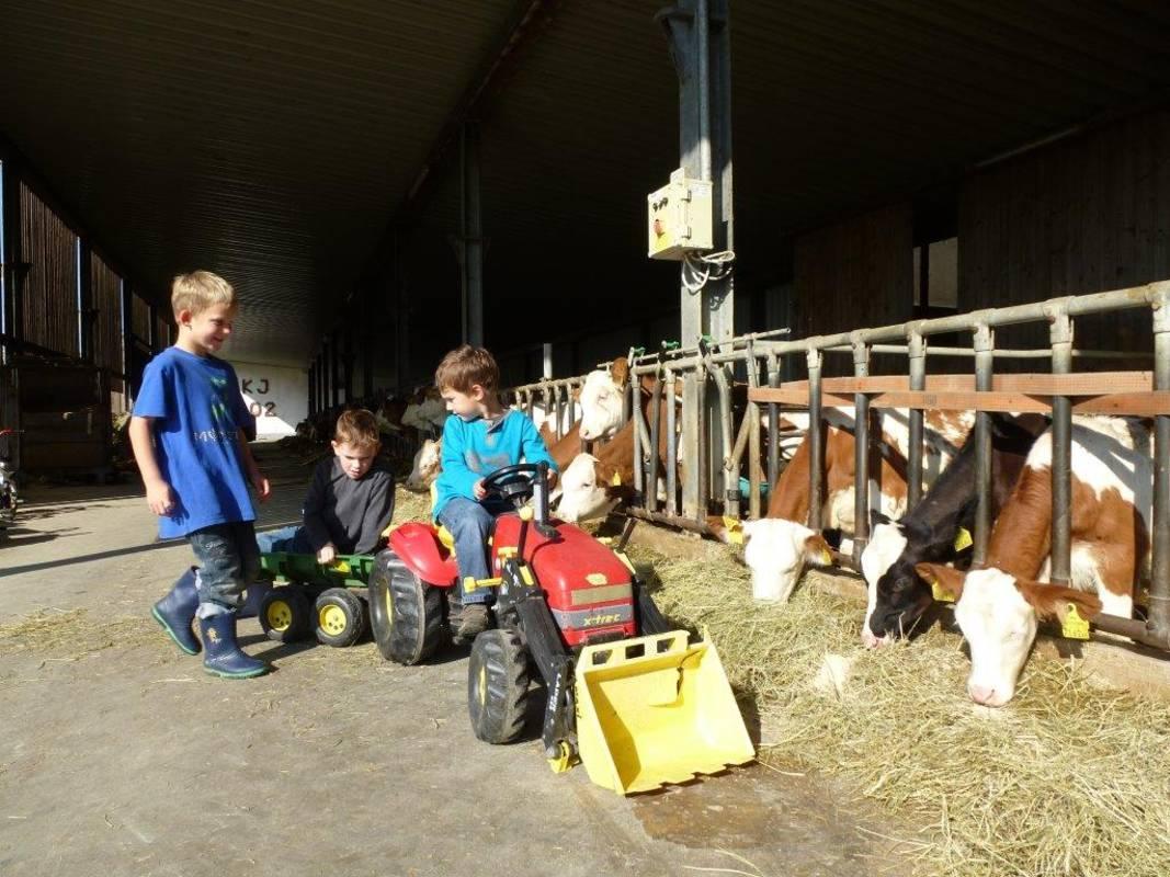 Kerndlerhof Kinder im Stall