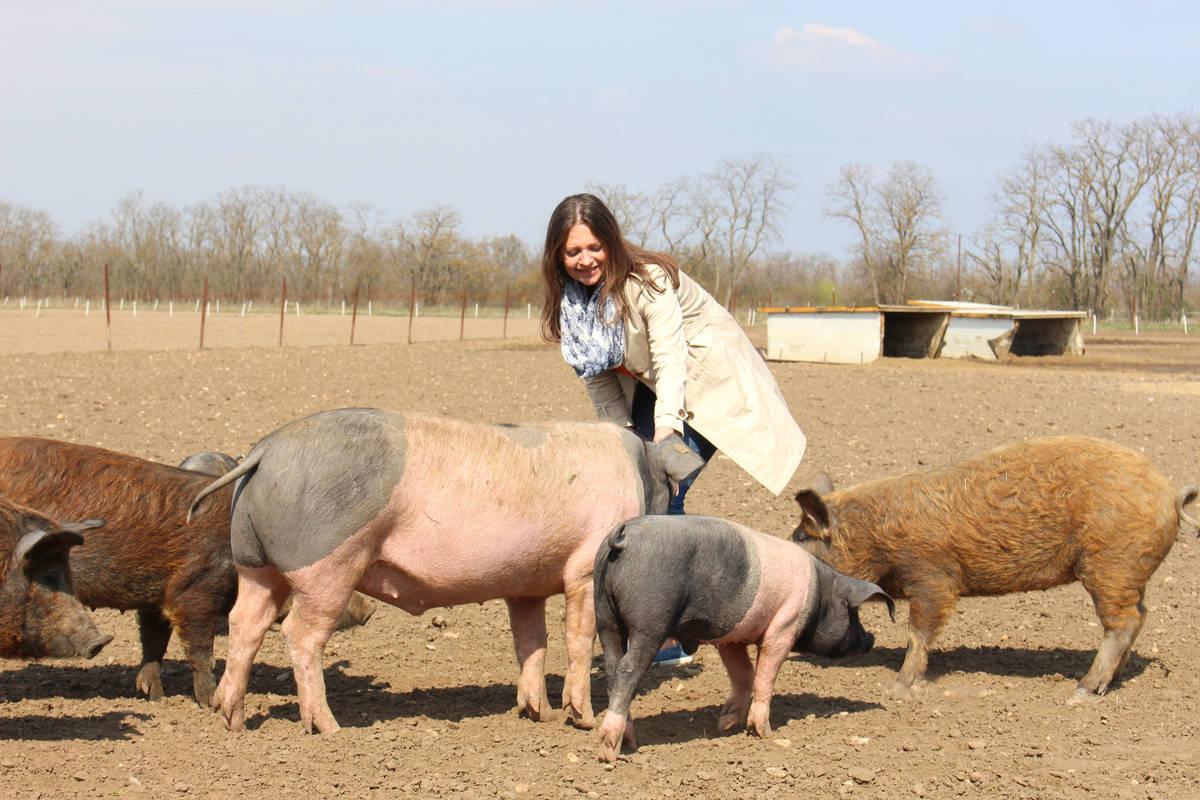 Führung auf der Schweineweide, Biohof Hubicek, Breitensee