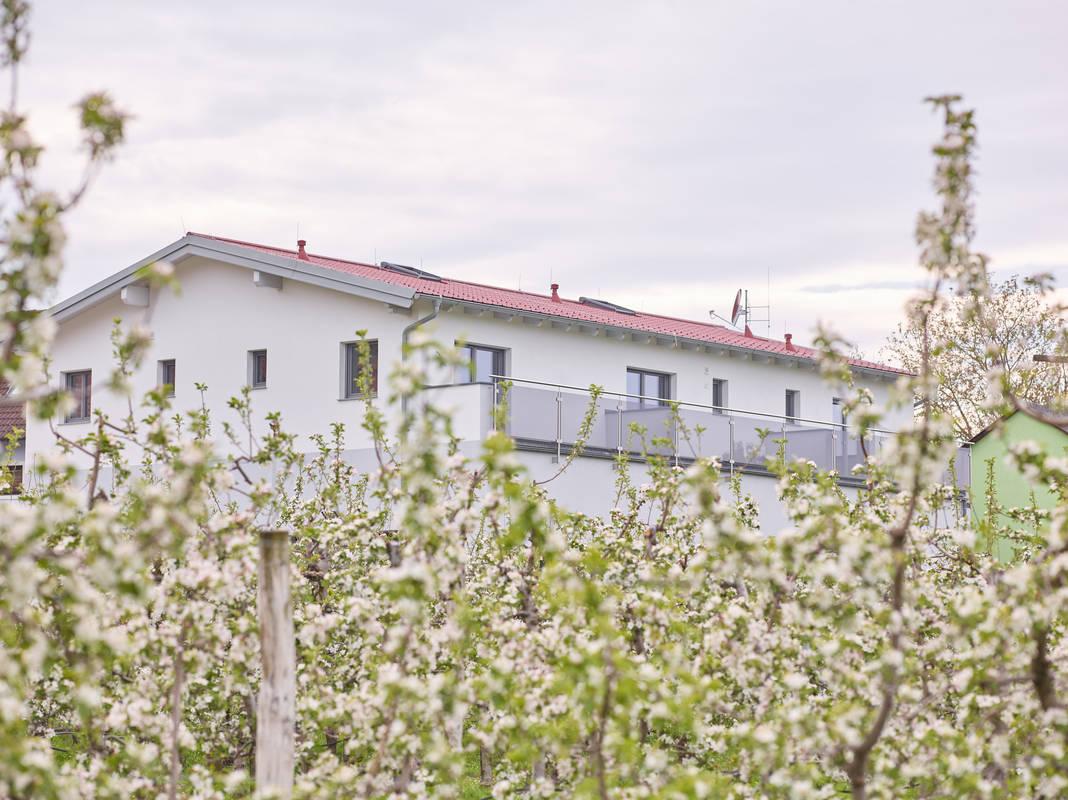 Marillenblüte im Weinhof Maier