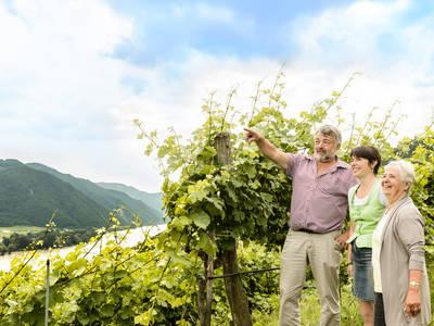 Aussicht Weingut Pomassl