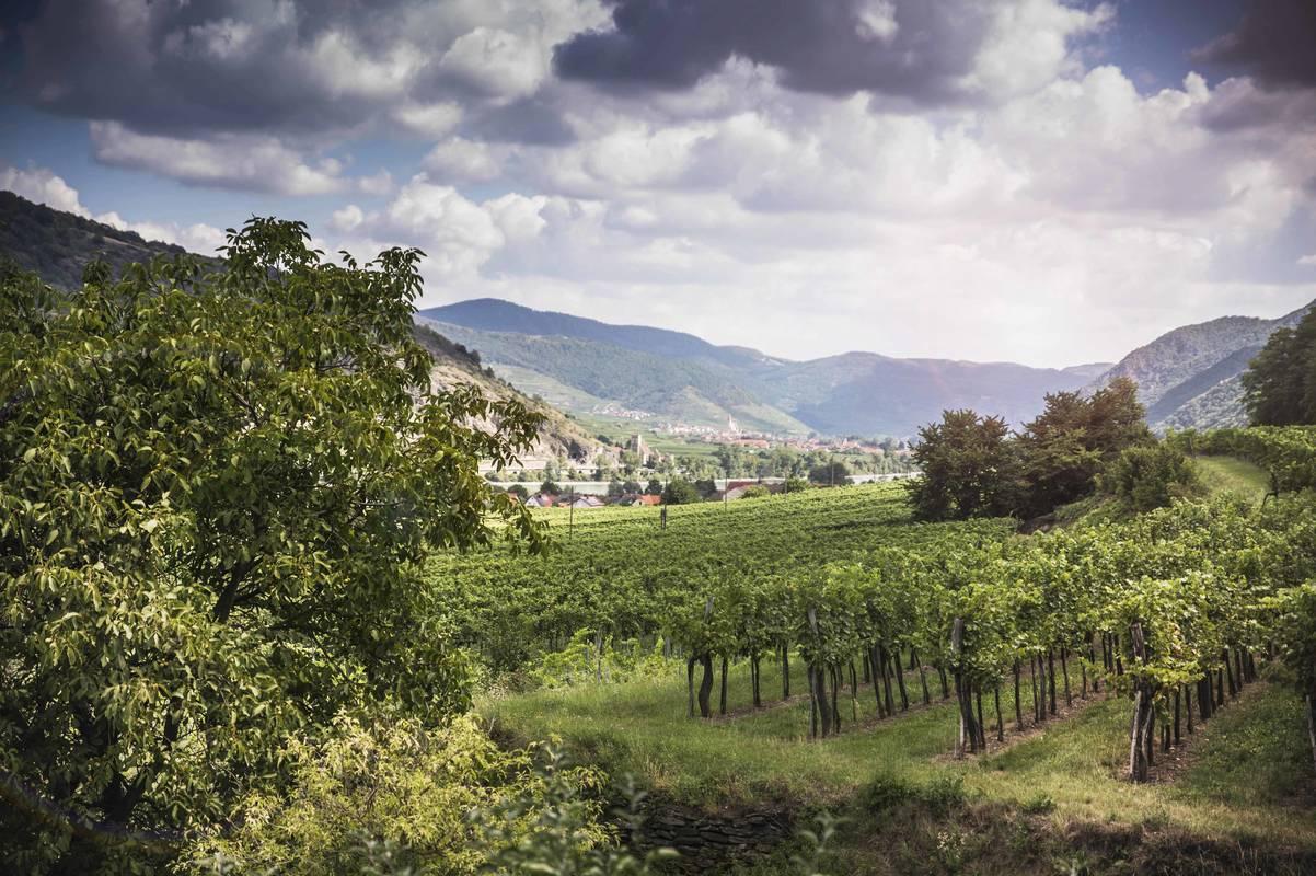 Aussicht Rossatz-Arnsdorf