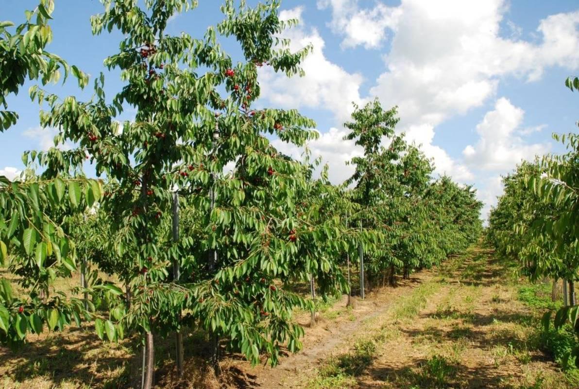 Obstbaumgärten der Familie Altenriederer