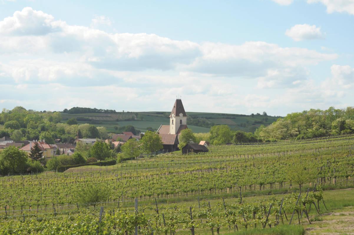 Weingarten beim Pleyel Museum
