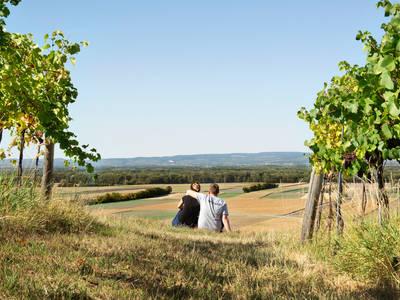 Weinbau Julian Winter
