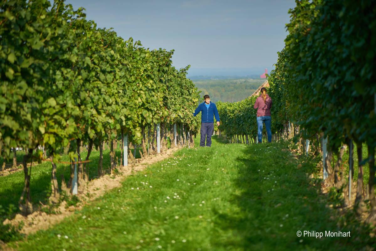 Weingartenbegehung
