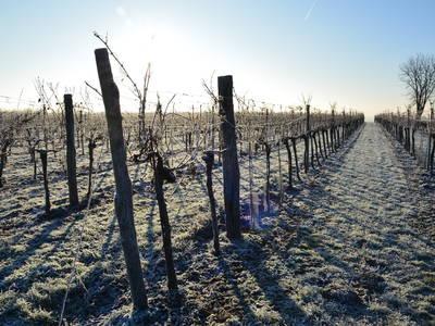 Weingarten im Winter aus der Riede Rainthal